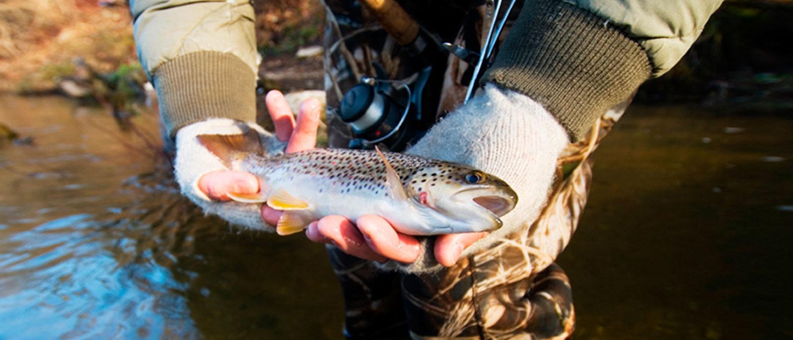 fischen suchen und buchen